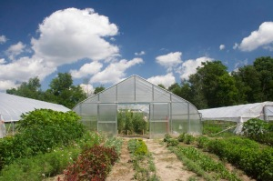 Greenhouses and hoop houses  at Capella Farm.