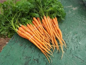 Carrots from Senna Prairie Farm.