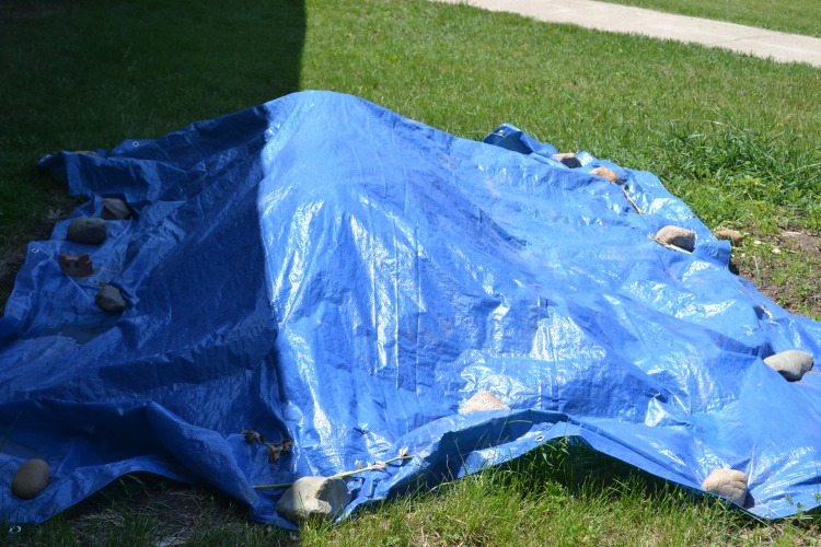 Tarps cover the compost piles, helping expedite the breakdown of organic materials, turning them into beautiful soil for our garden!