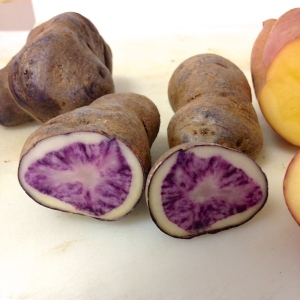 "The ""All Blue"" potato was one of 4 varieties students sampled."