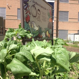 Soy beans, squash, and flowers surrounding the garden's new sign.