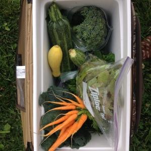 The harvest!