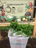The garden harvest ready to take into the school kitchen.