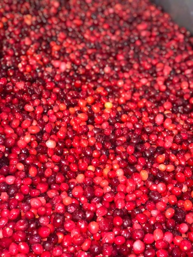 Cranberries from True Blue Farm