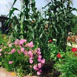 Three Sisters Garden
